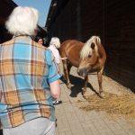 Selský dvůr - seniorky hladící si koně