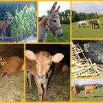 koláž fotek se zvířaty