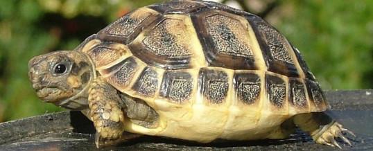 Želvička nalezena – poděkování